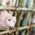 Javni poziv: Za postavljanje dvostrukih ograda u uzgojima svinja 2 milijuna kuna