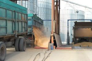Pad cena žitarica na svetskim berzama uticao na domaće tržište
