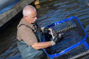 Dobrobit riba: EU treba jedinstven sustav i zakone za uzgoj riba