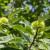 U projektu sadnje kestena, domaćinstvima će biti obezbjeđen siguran otkup