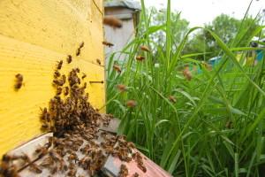 "Komisija registrirala inicijativu ""Spasimo pčele!"""