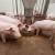 OBŽ objavila 13 javnih poziva za potpore u poljoprivredi!