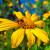 5 vrsta cvijeća koje privlači korisne kukce u vaš vrt