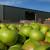 Novi sporazum o izvozu voća i povrća sa Rusijom od 20. oktobra
