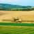Kukuruz i soja u silaži - jeftin i kvalitetan obrok za stoku