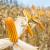 Cenovni oporavak kukuruza na Produktnoj berzi
