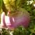 Setva repe: Vratimo starinsko, a zdravo povrće u bašte i na police
