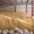 Pada interes i cena za prošlogodišnji rod na crnomorskom tržištu žitarica