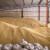 Saković: Srbija mora da se okrene novim tržištima za izvoz pšenice