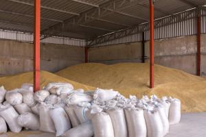 Povećanje zasijanih površina i pod žitom, poljoprivrednici očekuju dobre prinose