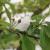 Kako će se niske temperature (pa i snijeg) odraziti na voćke?