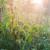 Mlijekom ojačajte biljke i spriječite razvoj bolesti