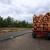 Novac kojega dobiju za posječenu šumu - moći će da koriste kako žele