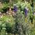 Ukrasi vrta koji mogu da budu i otrovni - proverite!