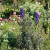 Ukrasi vrta koji mogu biti i otrovni - imate li kojeg od njih?