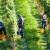 Vinogradari očekuju ove godine bolji i kvalitetniji rod grožđa