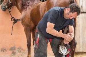 Pravilna njega kopita kod konja