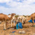 Penzioner pustio 80 kamila - gladne poharale useve u čak tri sela