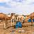 Umirovljenik pustio 80 deva, gladne životinje poharale polja i voćnjake u čak tri sela