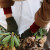 Zaštita biljaka od mraza: Malčiranje, prekrivanje, unošenje unutra