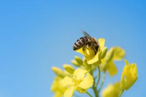 EFSA objavila najnovije izvješće o smrtnosti oprašivača uzrokovanoj pesticidima