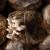 Kako gajiti gljive na talogu od kafe?