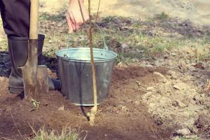 Kako posaditi voćke - od pripreme zemlje do zaštite sadnice
