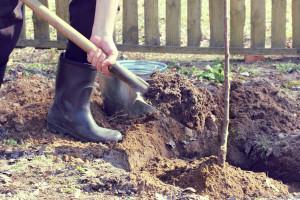 Sadnja voćaka - obavite ju pred kraj zime