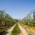 Stigla vlaga, ali i korovi u voćnjake i vinograde - kako ih suzbiti?