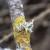Suzbijanje lišajeva na voćkama