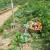 Vrt u kolovozu: Mjesec berbe, ali i sjetve, njege i radova
