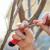 Kako uzeti i čuvati voćne plemke?