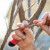 Kako uzeti i čuvati voćne kalem grančice?