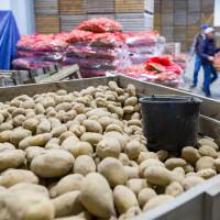 Loše skladištenje krivo što se oko 14% hrane izgubi od polja do trgovine?