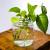 Hidroponika u kući - sobne biljke koje mogu da rastu u vodi