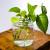 Hidroponija u domu - sobne biljke koje mogu rasti u vodi