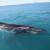 Institut Plavi svijet pohvalio građane: I dalje nam šaljite dojave o kitovima i drugim predatorima