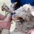 Poljska planira da zabrani klanje životinja po verskim pravilima