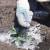 Rešite se raznih štetočina i glodara pomoću dijatomejske zemlje
