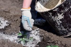 Kako napraviti prirodna gnojiva
