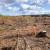 EK pokrenula javno savjetovanje o krčenju i degradaciji šuma, a aktivisti peticiju