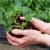 Koje su prednosti prolećne sadnje jagoda?