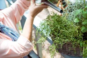 Zalivanje biljaka gaziranom vodom - prednosti i primena