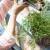 Zalijevanje biljaka gaziranom vodom - prednosti i primjena