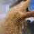 Brexit donosi pad proizvodnje žitarica Velikoj Britaniji?
