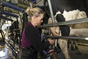 Prolijevaju mlijeko: Kriza prisiljava farmere na radikalne poteze