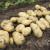 Zabranjen uvoz 27 tona konzumnog krompira zbog prisustva bakterija!?