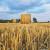 Online događaj: Saznajte koji su potencijali korištenja agrobiomase u Hrvatskoj