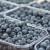 Traje berba borovnice u USK: Na hektaru zasada zarada i do 10.000 KM