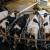 TOP 10 najvećih isporučitelja kravljeg mlijeka u Hrvatskoj